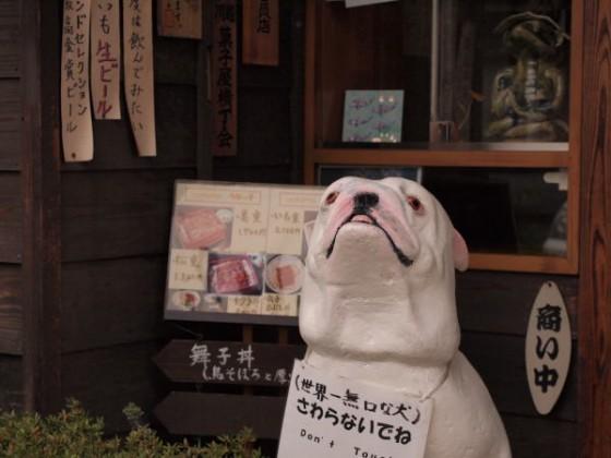 川越市にいる 世界一無口な犬