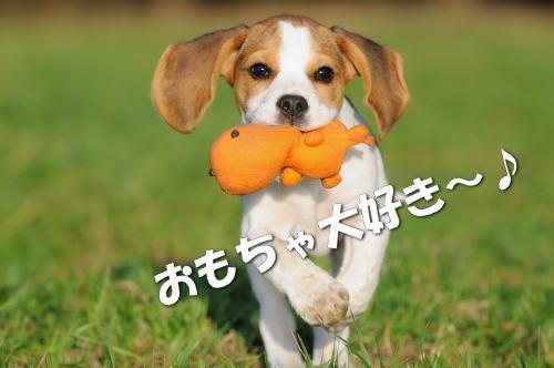 おもちゃ大好き~