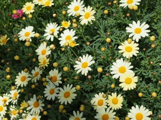 保育園の花壇
