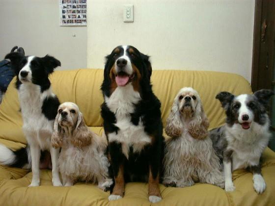 うちの犬ちゃんたち