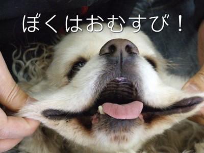 ぼくはおむすびだよ。オニギリじゃないよ(^○^)