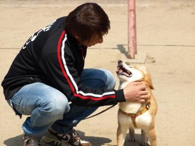 犬のしつけは絶対に楽しい!