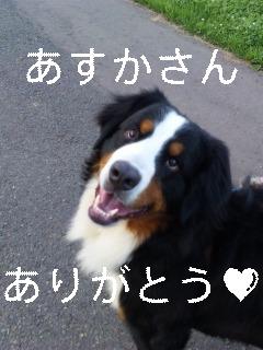 バーニーズマウンテンドッグの福来丸ちゃん