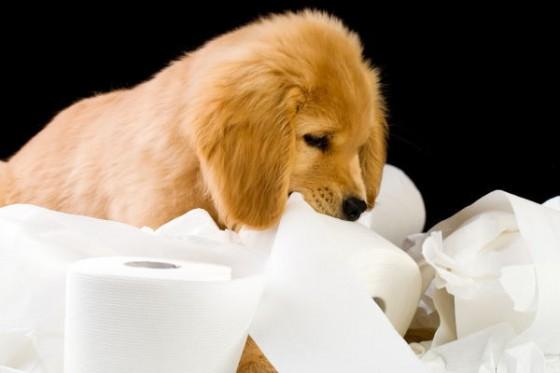 犬にとってはなんでもおもちゃ。