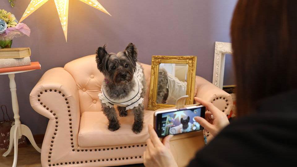 愛犬撮影教室
