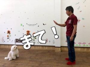犬にまてを教える
