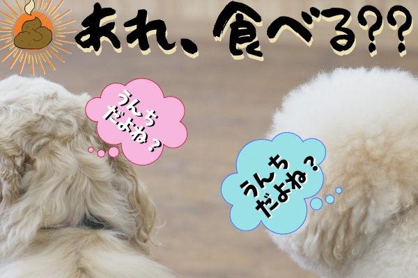 犬の食糞について