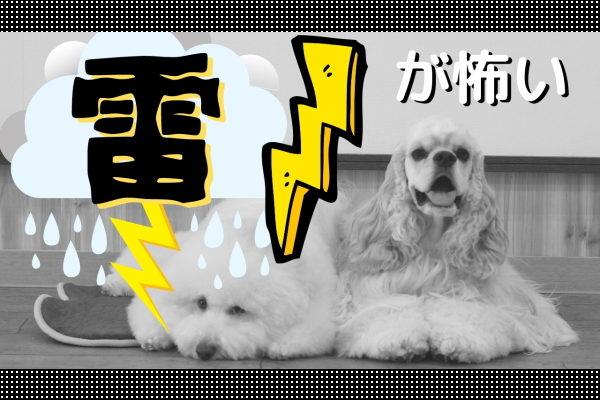 雷を怖がる犬