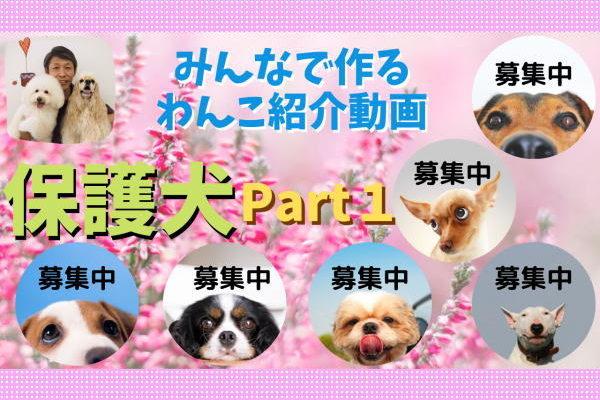 保護犬紹介動画
