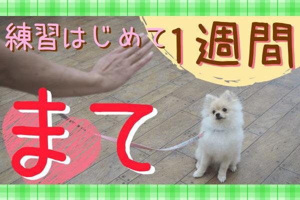 子犬とマテの練習
