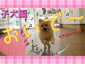 犬とおいでの練習