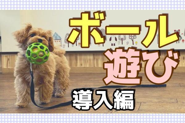 子犬とボール遊びをしよう!